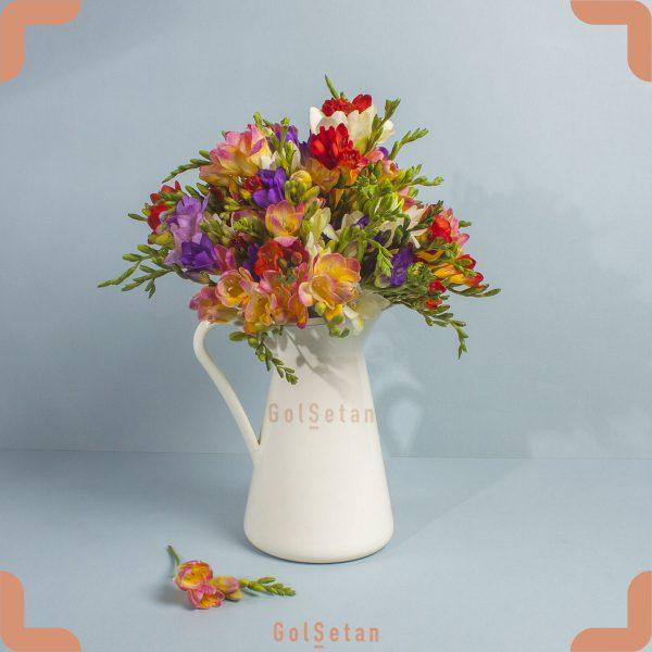 خرید گل فریزیا
