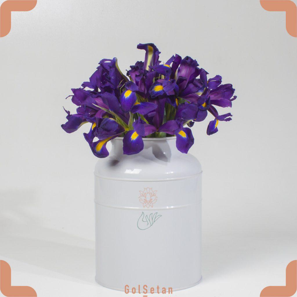 گل زنبق هلندی