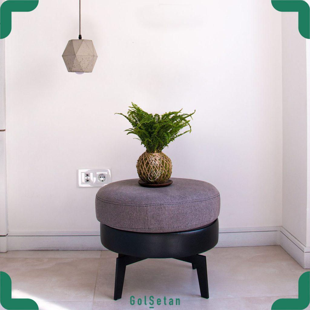 گیاه کوکداما