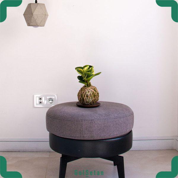 دیزاین کوکداما