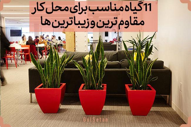 ۱۱ گیاه مناسب برای محل کار (گلهای مقاوم برای محیط کار)