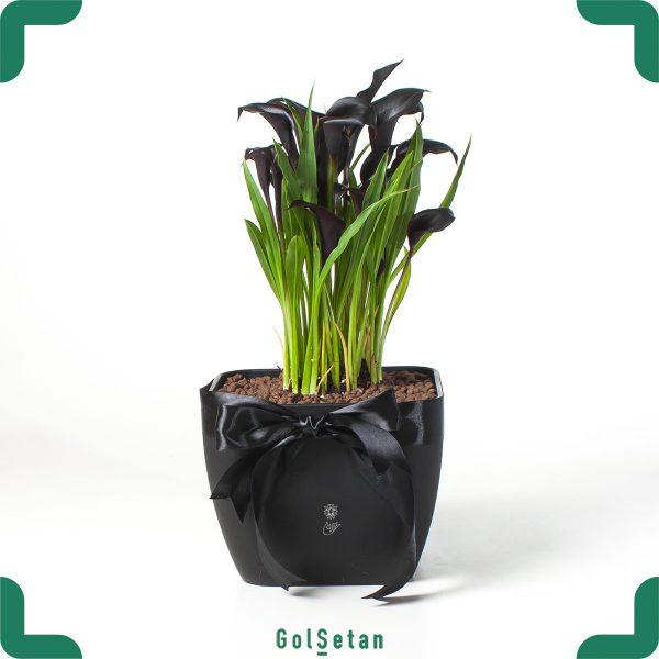 گلدان شیپوری برای ترحیم