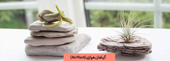 گیاه های هوازی