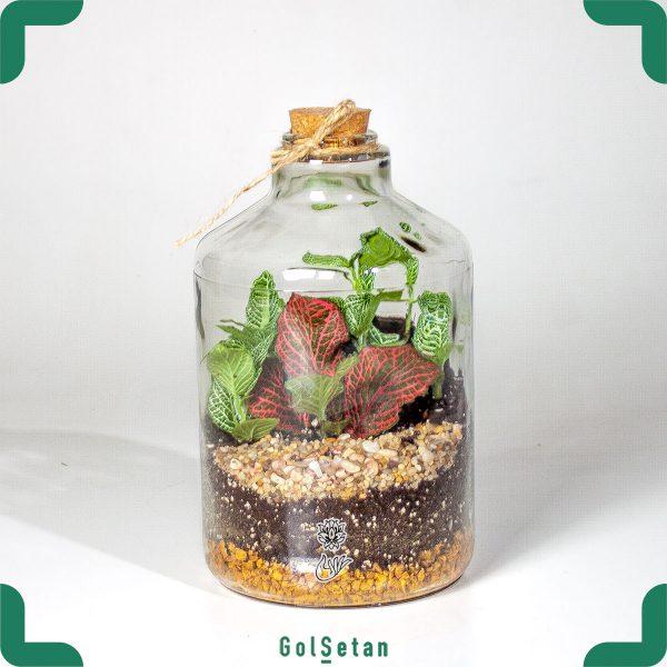 گیاه در شیشه