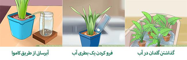 آبیاری گیاهان هنگام مسافرت