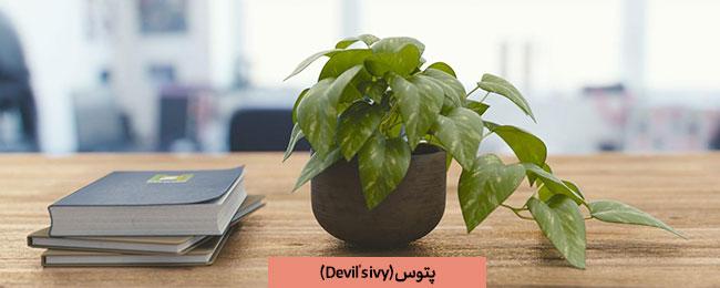 گلدان پتوس در فضای شرکت