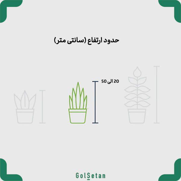 گیاه گلدانی متوسط