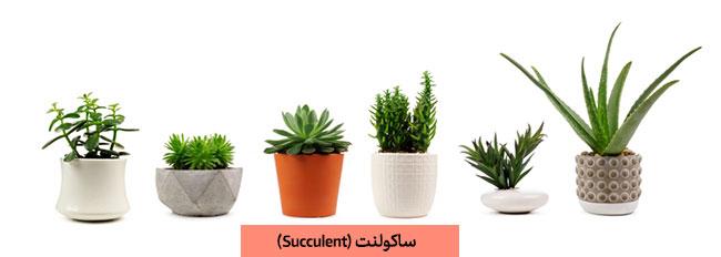 ساکولنت ها Succulent