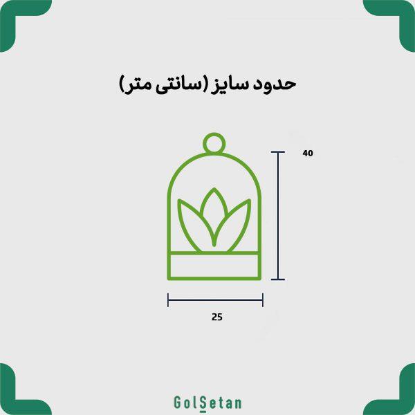سایز گیاهان تراریوم