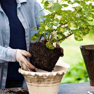 کاشتن گیاه در گلدان