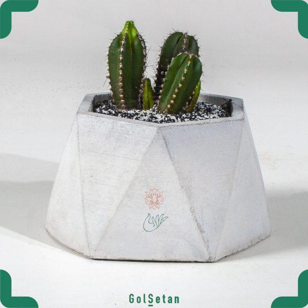 کاکتوس در گلدان بتنی
