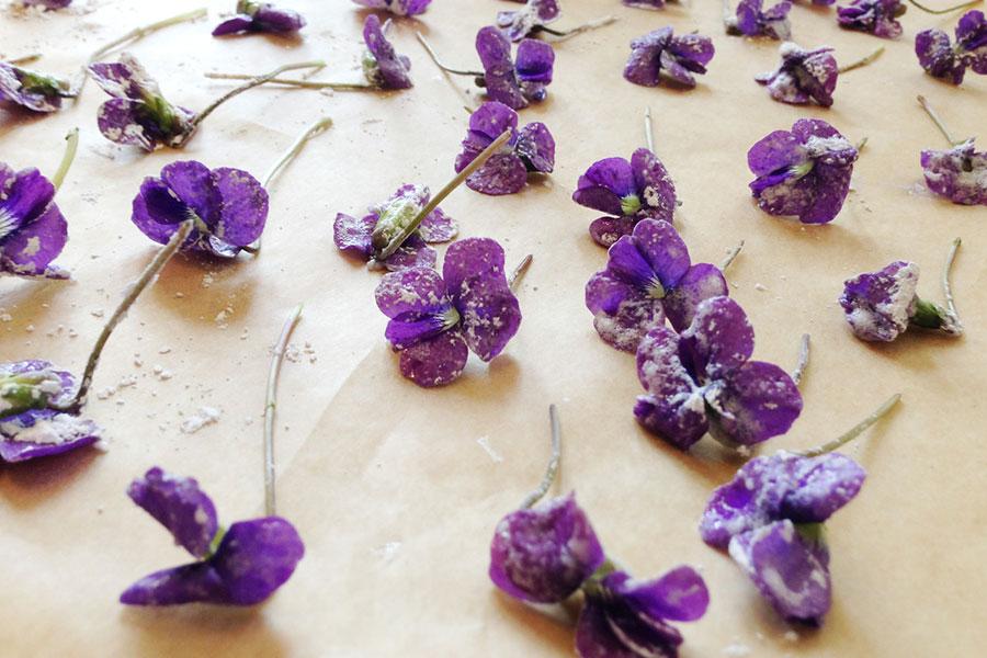 گل خوراکی بنفشه آفریقایی
