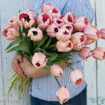 گل لاله هلندی Tulips