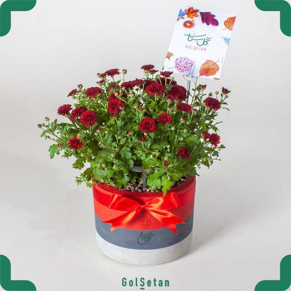 گلدان گل داوودی پاییزی