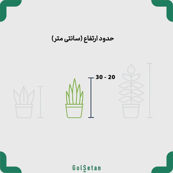 ابعاد گیاه آپارتمانی دراسنا کامپکت