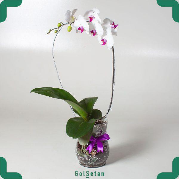 گلدان ارکیده سفید بنفش