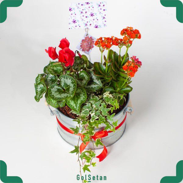 ترکیب گیاهان داری گل قرمز