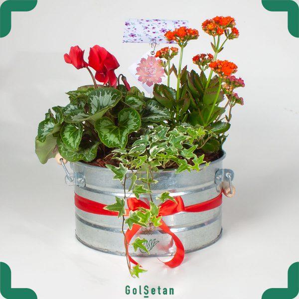 گلدان باغ گلها با گیاهان گلدار زیبا