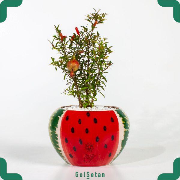 گیاه انار مینیاتوری با گلدان سرامیکی هندوانه