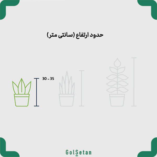ارتفاع گلدان لاکچری پارسه