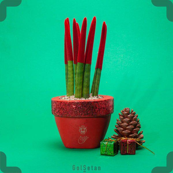 گیاه سانسوریا نیزه ای قرمز با گلدان بتنی