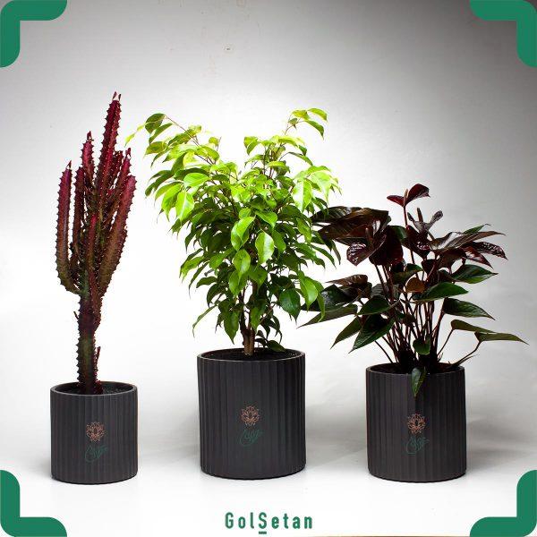 پکیج گیاهان آپارتمانی خاص