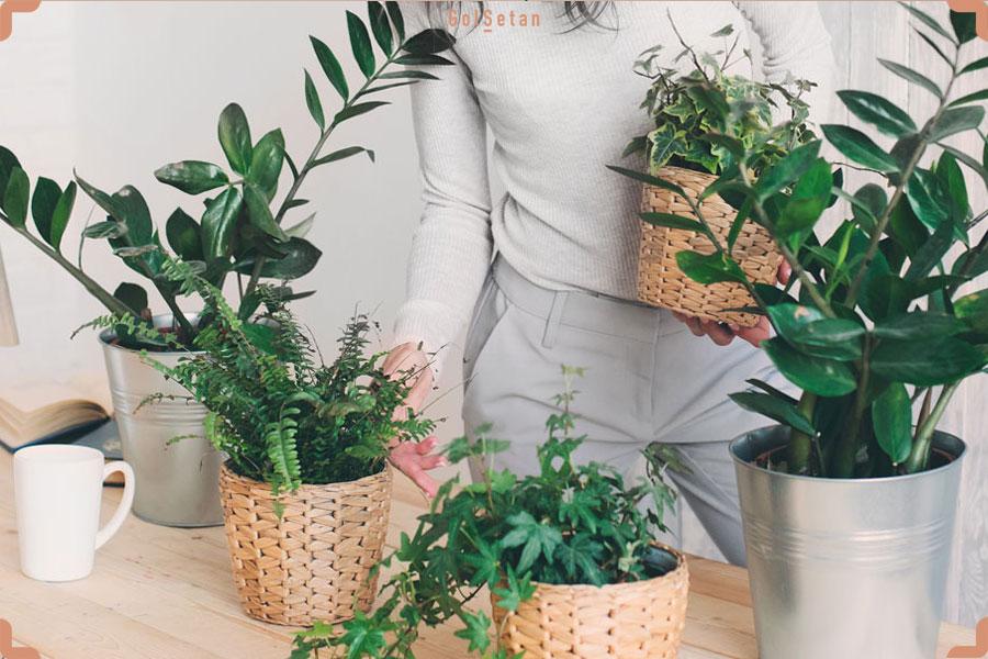 نحوه ی قرار دادن گیاهان در منزل