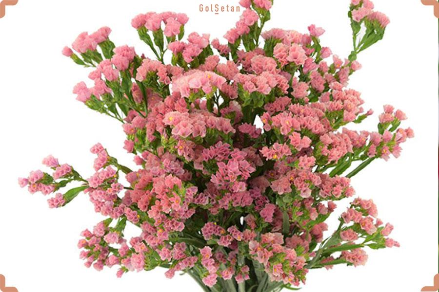 آشنایی با گل استاتیس