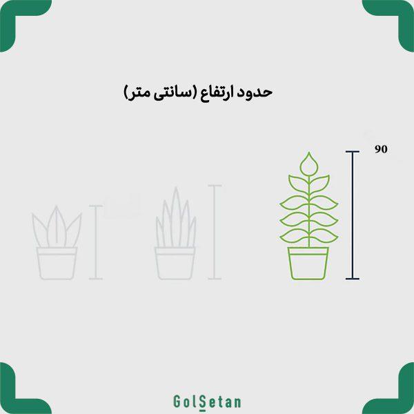 سایز گیاه پرنده بهشتی در گلدان بتنی