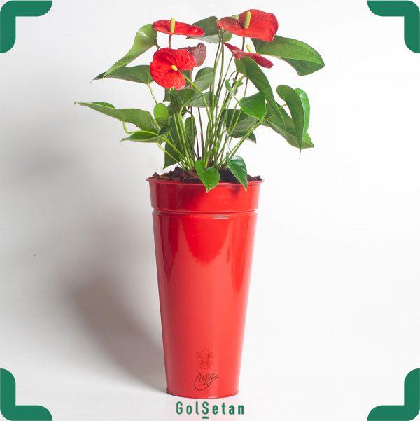آنتوریوم قرمز در گلدان فلزی زیبا و جذاب