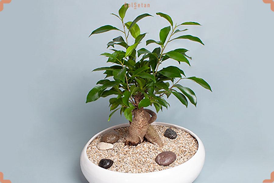 درختچه زینتی