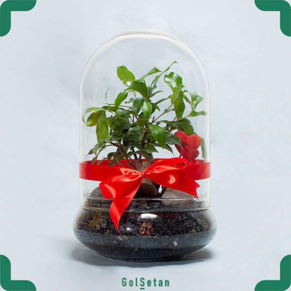 باغ شیشه ای بونسای زیبا و شیک