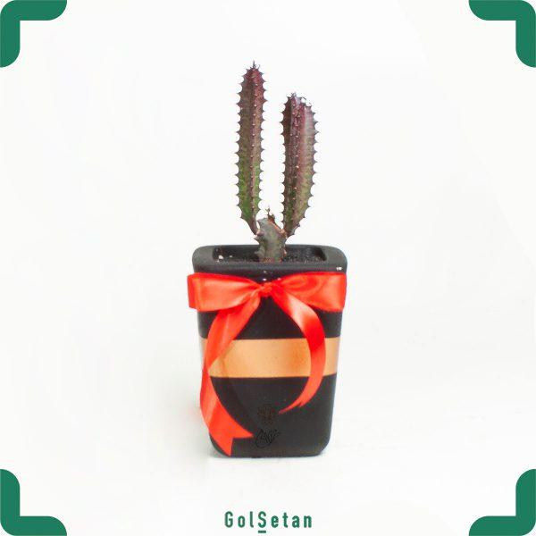 افوربیا قرمز در گلدان بتن زیبا