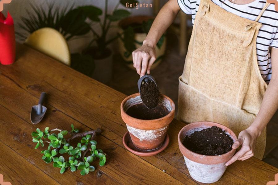 گلدان مناسب برای تکثیر گیاه خانگی