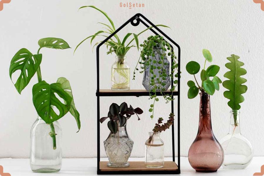 ریشه زایی در آب برای تکثیر گیاهان آپارتمانی