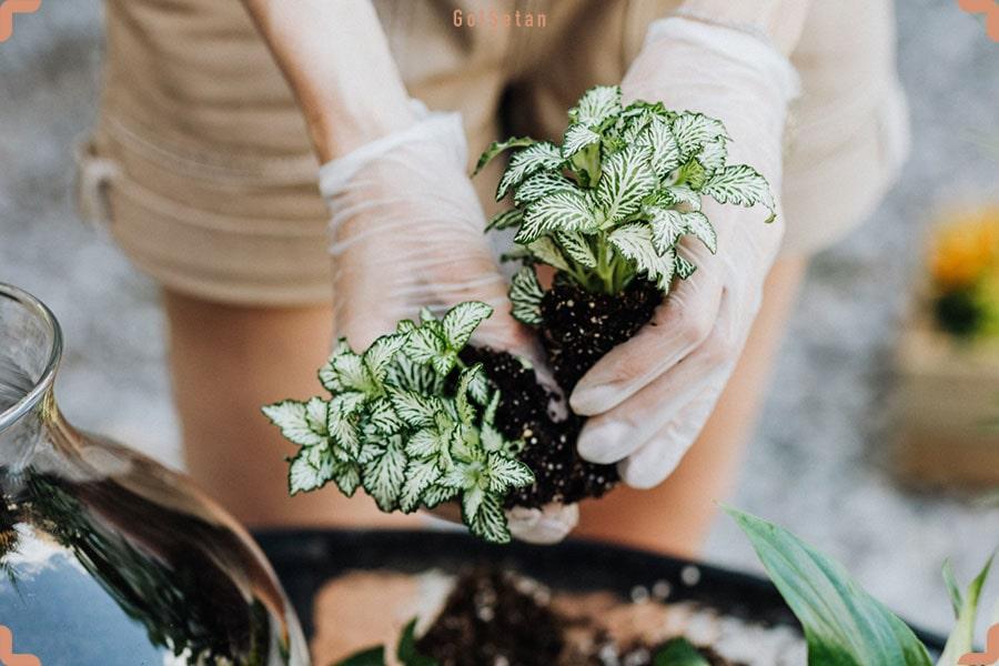 تکثیر گیاهان آپارتمانی به روش تقسیم