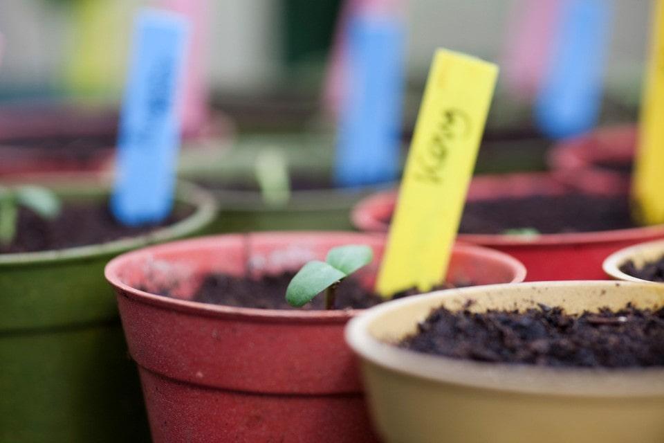 کاشت بذر گیاهان آپارتمانی