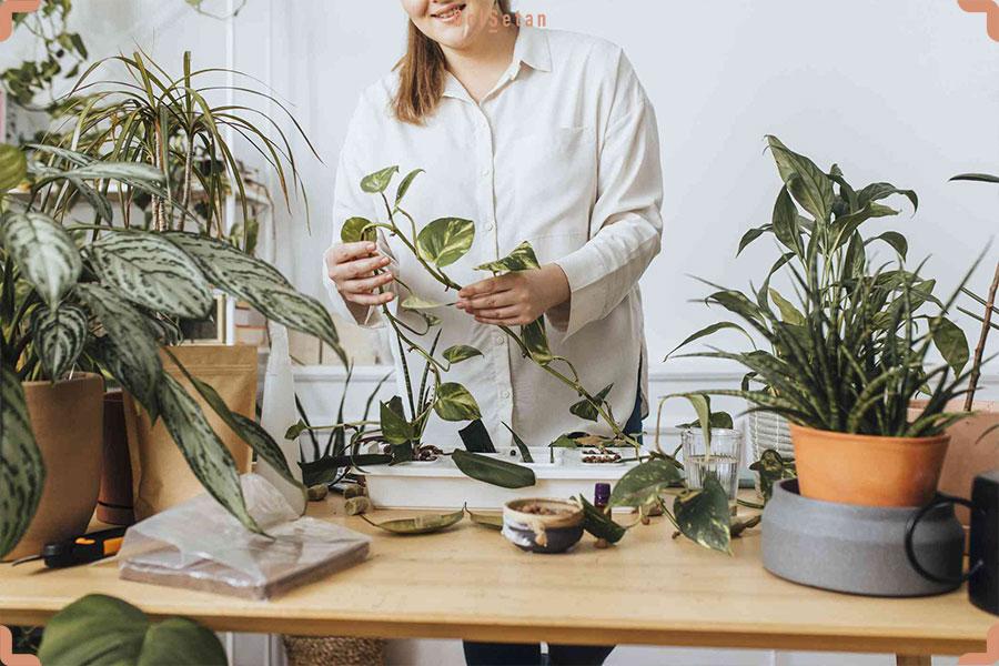 تکثیر گیاهان آپارتمانی به چه معناست؟
