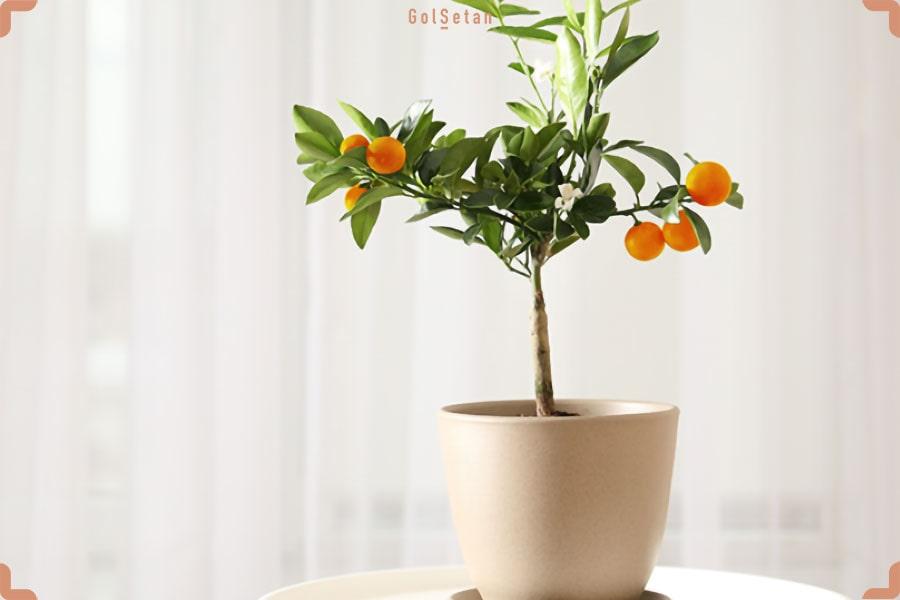خاک مناسب برای نگهداری از درخت لیمو